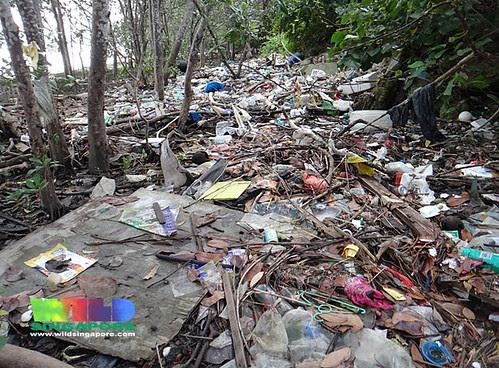 Marine debris in Kranji mangroves