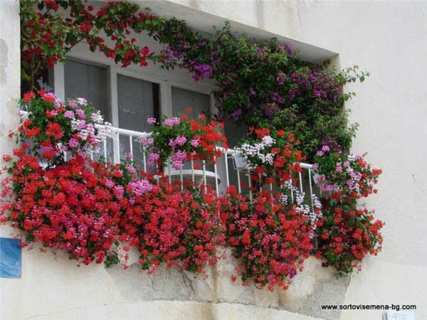 AD-Spectacular-Balcony-Garden-12