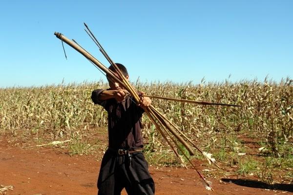 Estudo denuncia produção de soja e cana em terras dos Guarani-kaiowá