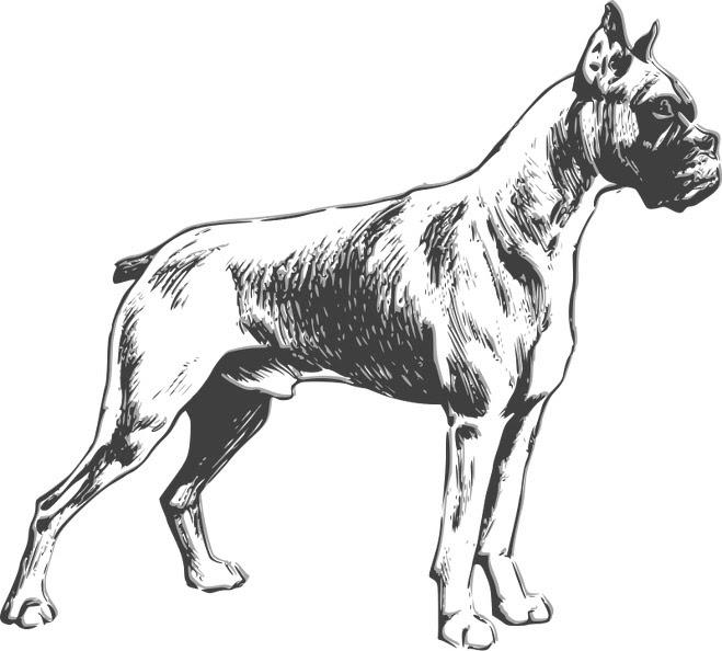 Ausmalbilder Hunde 4 | Ausmalbilder Kostenlos