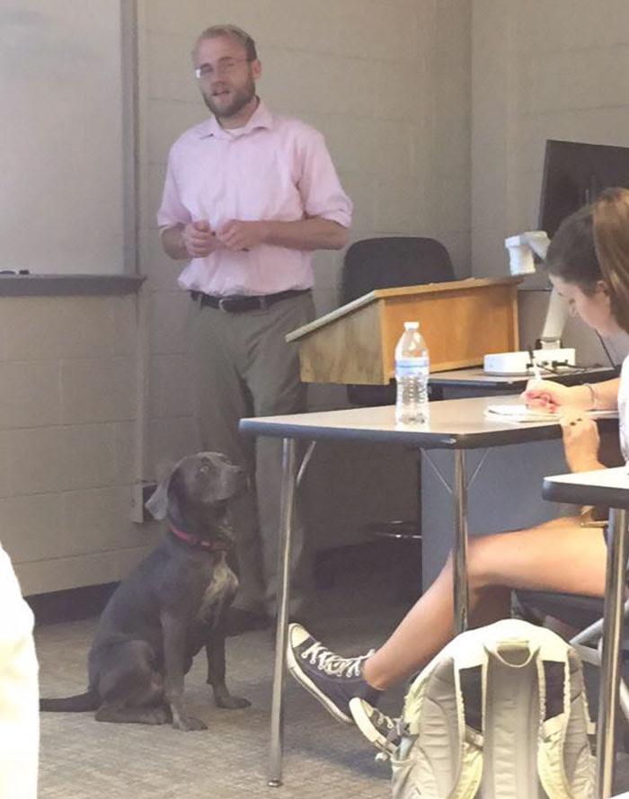 τάξη Σκύλος