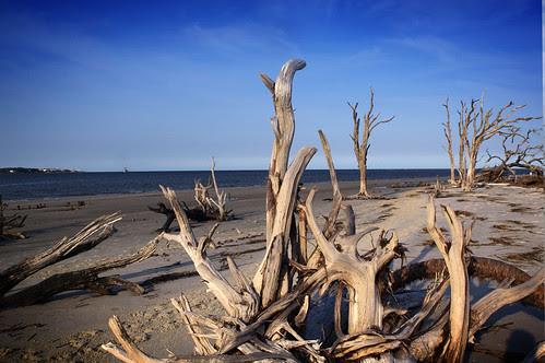 Driftwood Beach by erickpineda527