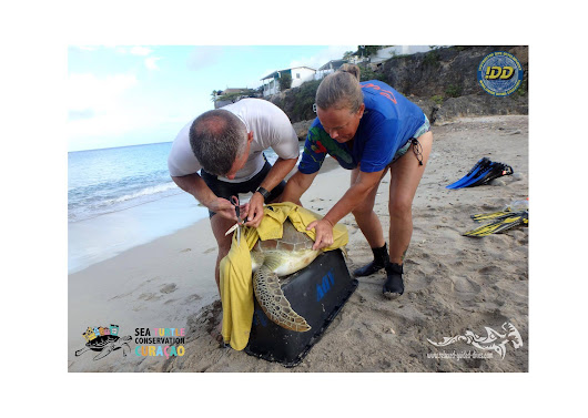 Sea Turtle Rescue, our first training - Relaxed Guided Dives