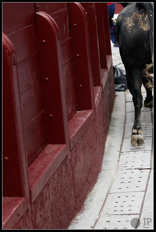 Toro en el callejón