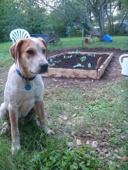 Dog Waste In Compost: Why You Should Avoid Composting Dog Waste