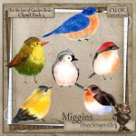 CU Hand Drawn For the love of Garden Birds Clipart 5