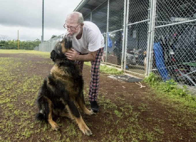 A pesar del peligro tras la erupción en Hawái, estos héroes lo arriesgan todo por los animales