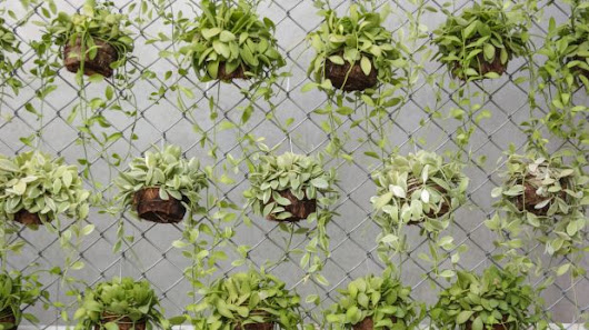 How to grow an edible vertical garden this winter