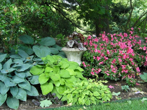 Ideas for landscaping: Useful Shade landscaping ideas zone 6