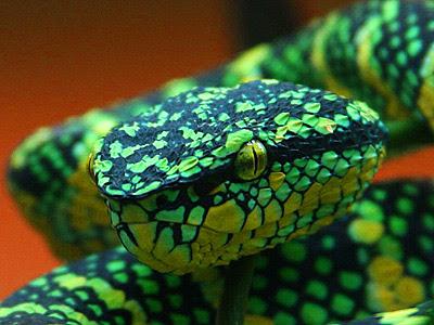 Green Snake Dream Dream Interpretation Symbols