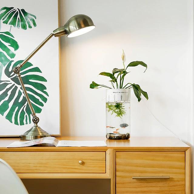【魚草生態迷你缸】 平衡生活、美化空間 需要魚和植物