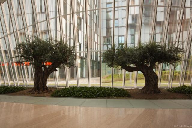 Olivos en el hall