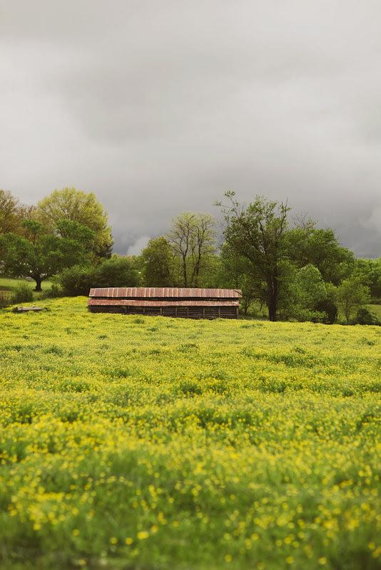 spring (5 of 8)