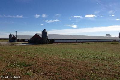 Farms, Homes, Acreage, Ag Land, Chicken Farms, Horse Farms, Lots, Land for Chicken Houses, and Hunting  Properties in Caroline, Dorchester, Kent, Queen Annes, Somerset, Talbot, Wicomico Counties in Maryland and Kent and Sussex Counties in Delaware.