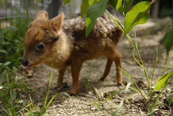 Οι 50 καλύτερες φωτογραφίες ζώων του 2012 (44)