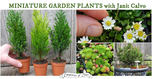 How to Choose Living Plants for a Miniature Garden