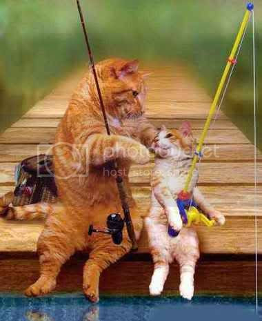 fish Cat