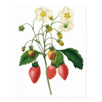 Vintage Food Fruit Berries Strawberries by Redoute Post Card