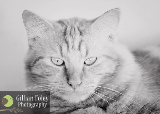 The smallest feline is a masterpiece - Gillian Foley Photography