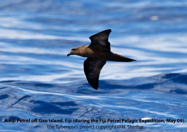 Interview: Hadoram Shirihai and Tony Pym of the Fiji Petrel expedition