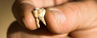 An ancient tooth found at an archeological site near Rosh Haain, central Israel. (AP/Oded Balilty)