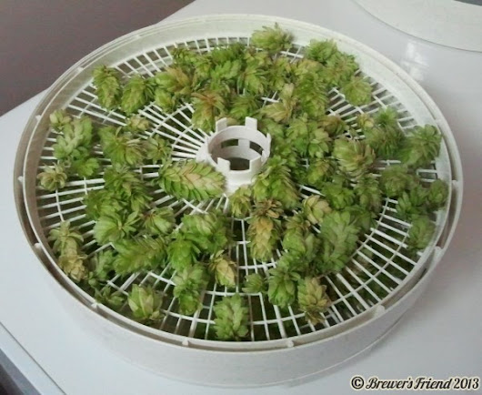 Drying Hops Using a Food Dehydrator – Great Results | Brewer's Friend