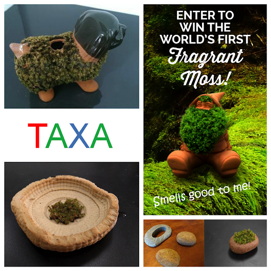 WIN the World's 1st Fragrant Moss