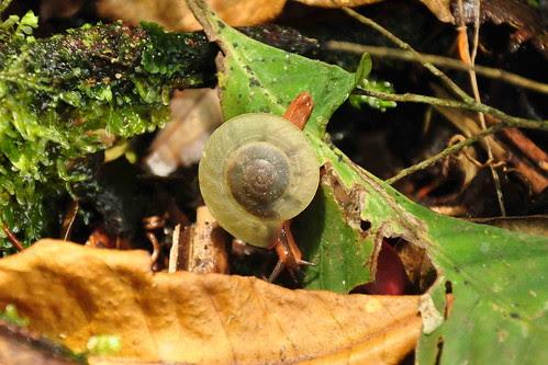 DSC_01 - snail