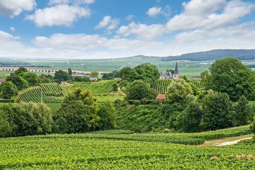 An Introduction For Champagne Lovers | Franc Parler Tours