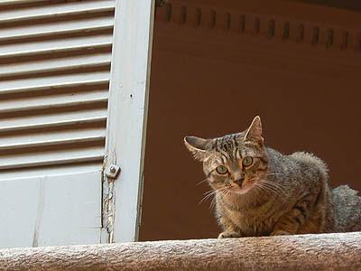 chat à la fenêtre.jpg