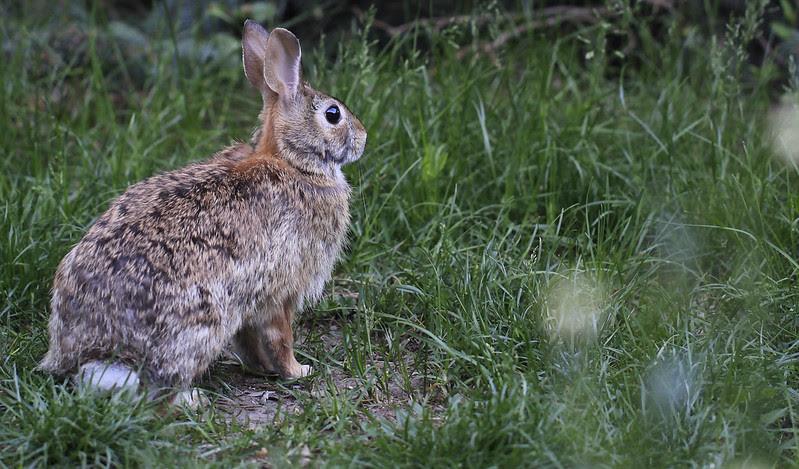 front yard bunny front door2