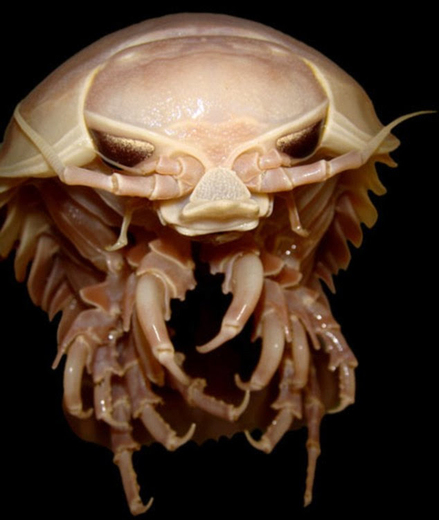 48+ Gambar Binatang Dasar Laut HD Terbaru