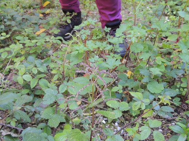 passeio de reconhecimento de plantas medicinais em Cascais