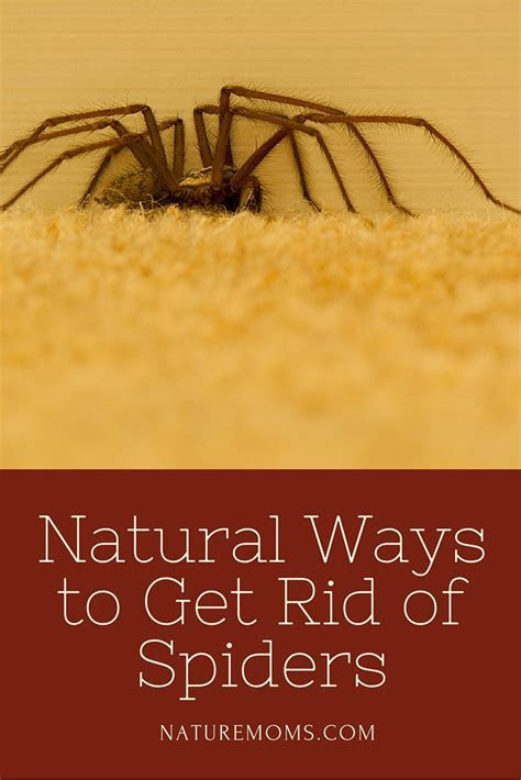 How To Get Rid Of Spiders In House ? House Plan 2017