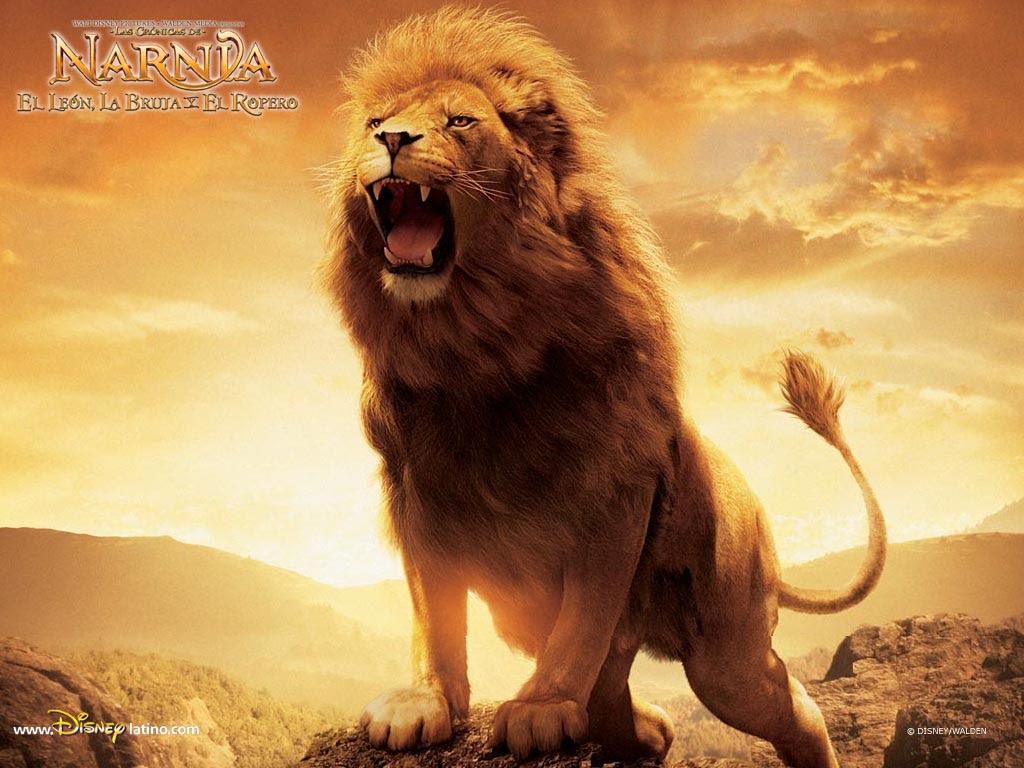 74+ Gambar Singa Paling Hist