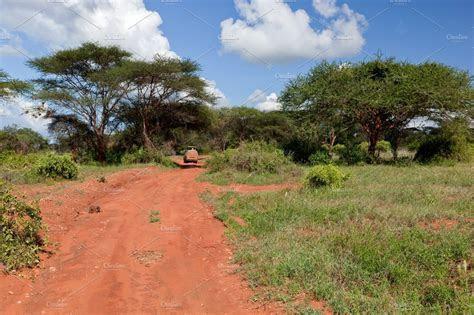 Savanna landscape in Kenya, Africa ~ Nature Photos