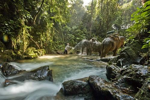 Elephant trekking Khao Sok National Park Thailand