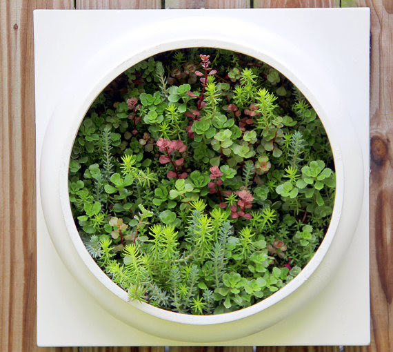 Wall Planter Products on Houzz
