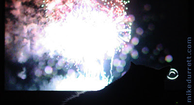 Morty the cat watches July 4th Independence Day fireworks.