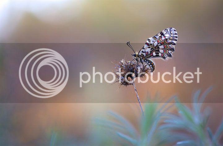 photo Remus-Moise-4_zps99426dc2.jpg