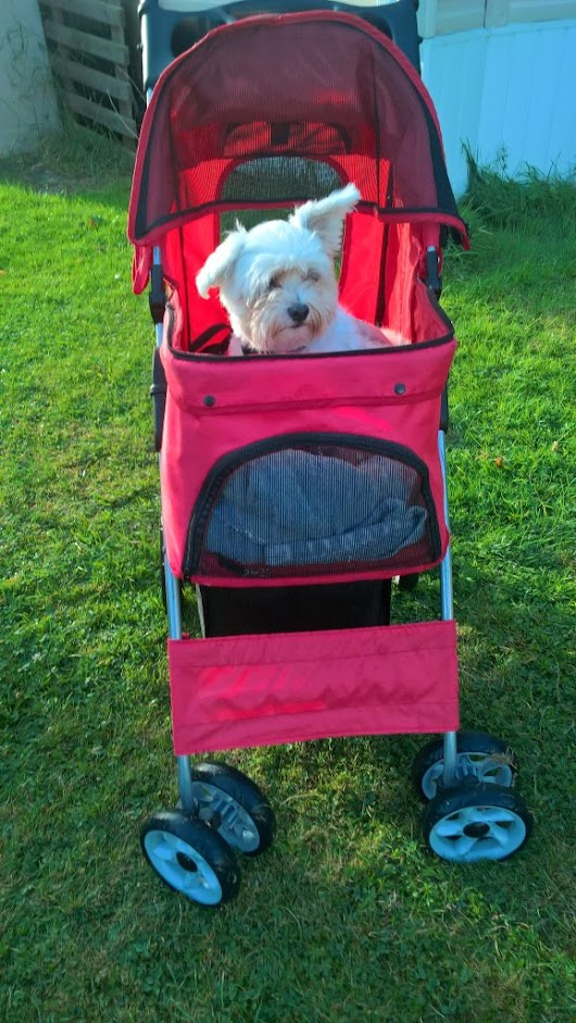 Why You Need a Pet Stroller - Caring For a Senior Dog