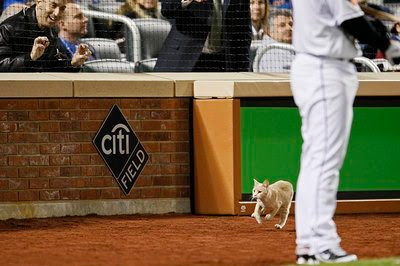 How well does the home team play with a cat on the field?