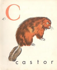 abc castor p3