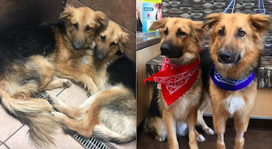 Shelter Dogs Who Wouldn't Let Go Of Each Other Find A Real Home — Together