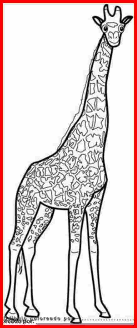 Dibujo De Animales De La Selva Para Colorear E Imprimir