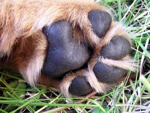 Kobe's paw