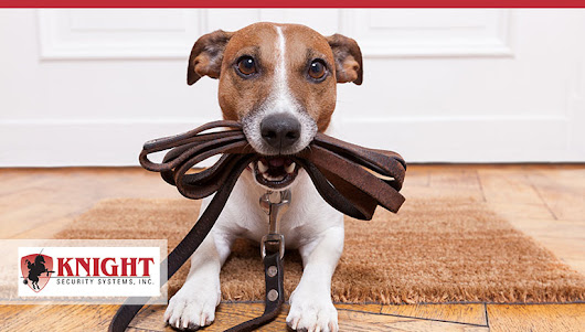 Pets and Home Security Systems Can Coexist In Harrisburg PA.