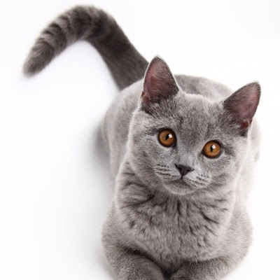 8 Ways That Cats Talk to Us With Their Tails | Catster