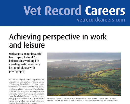 Article: Vet Record Careers - Achieving perspective in work and leisure