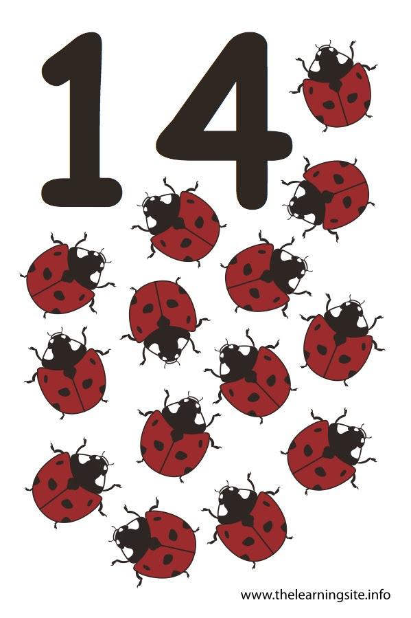 flashcard number fourteen ladybugs